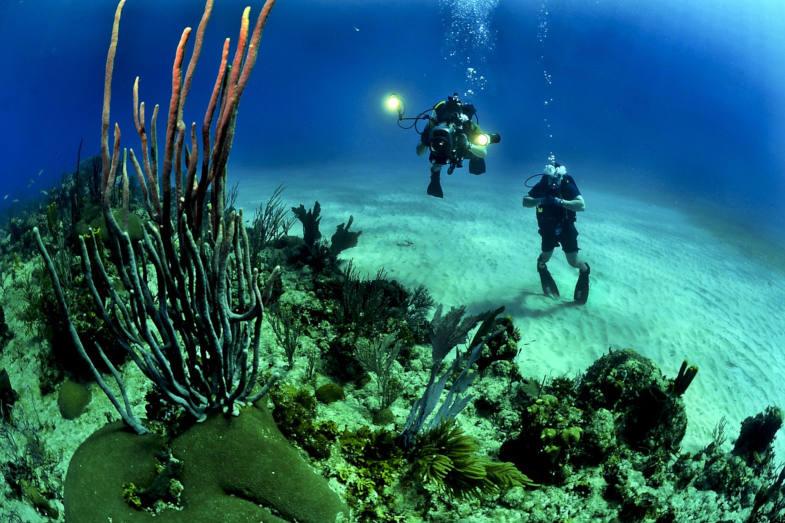 Diving in Camogli and Portofino