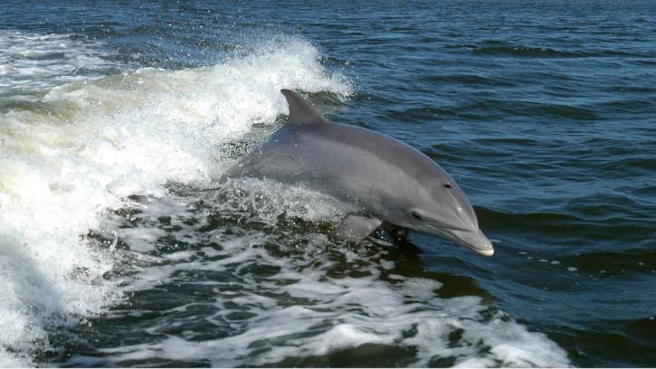 Avvistamento cetacei in Liguria